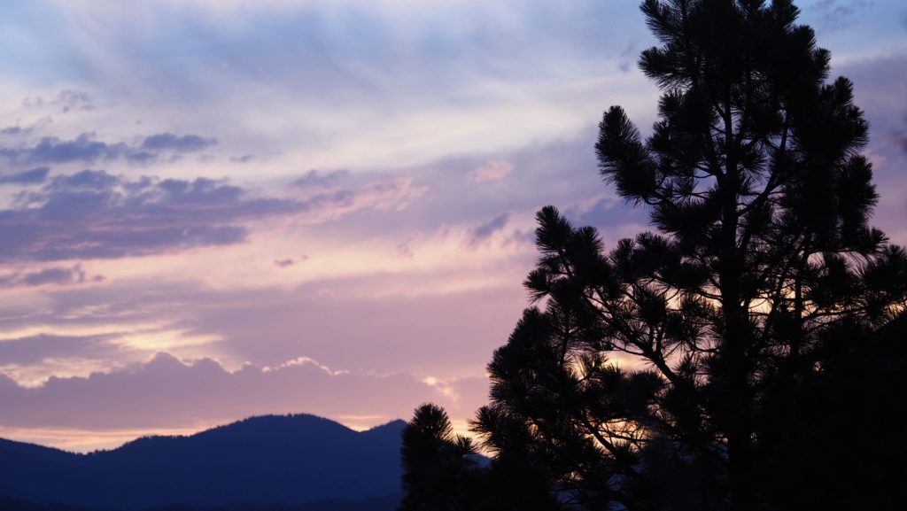 Pine tree with silver blue clouds at sunset
